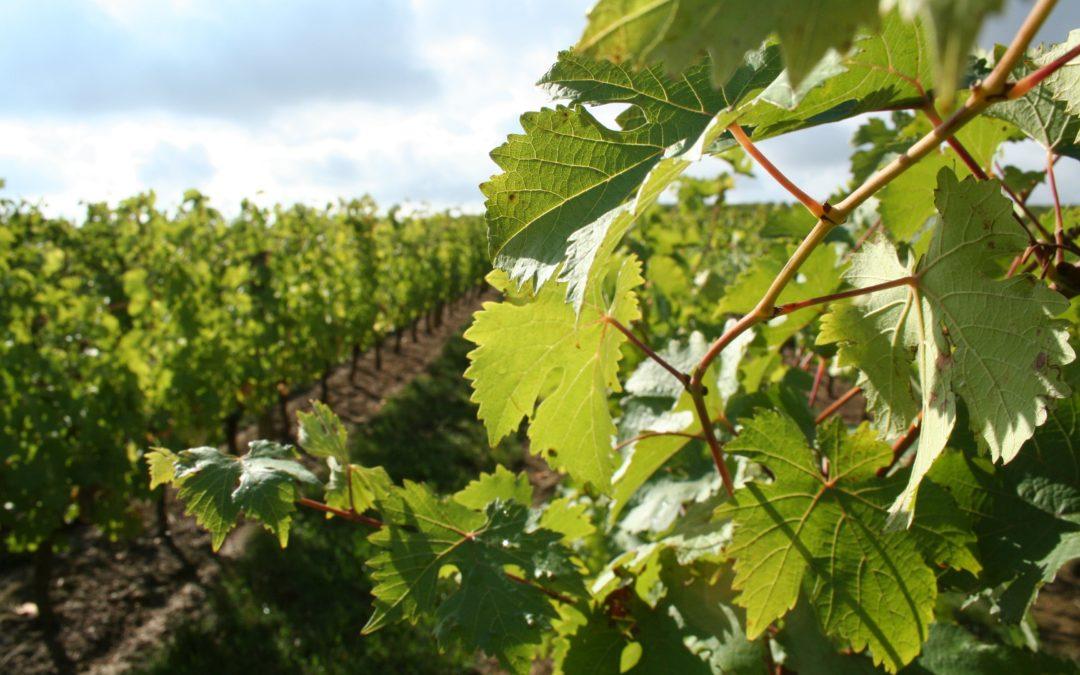 Randonnée vigneronne samedi 14 juillet 2018